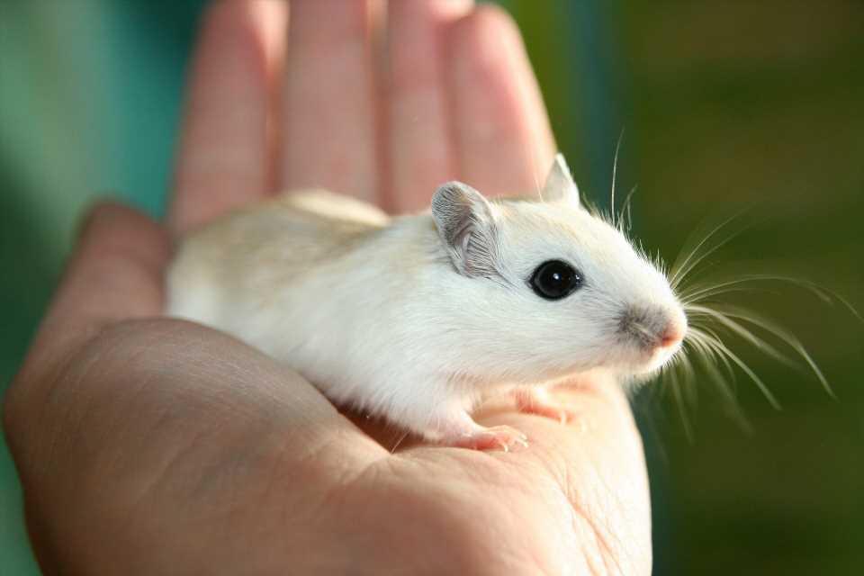 cfarmafoto5-mice.jpg